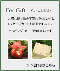 For gift ギフトのお客様